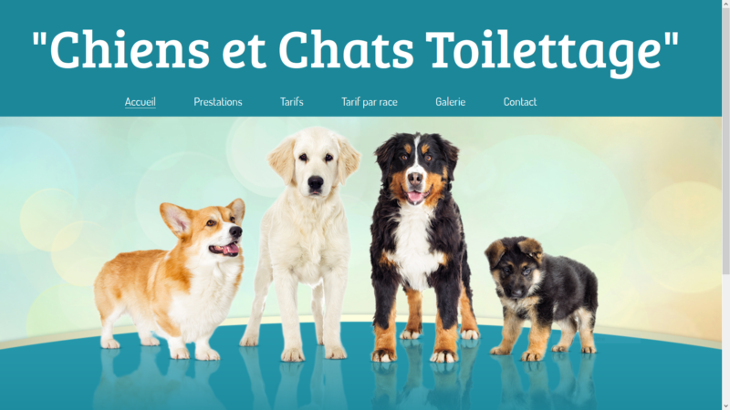 Toiletteur et toiletteuse pour chiens et chats